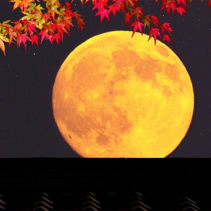худая лунный календарь на октябрь фото побила все